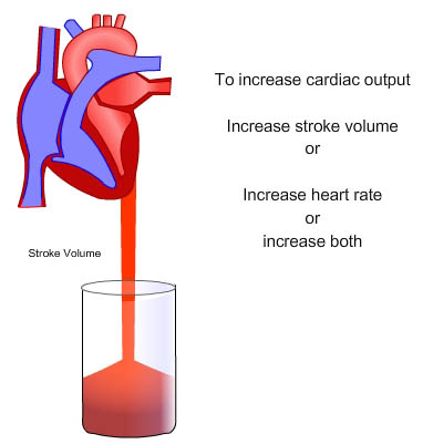 How can the heart increase cardiac output? | Socratic